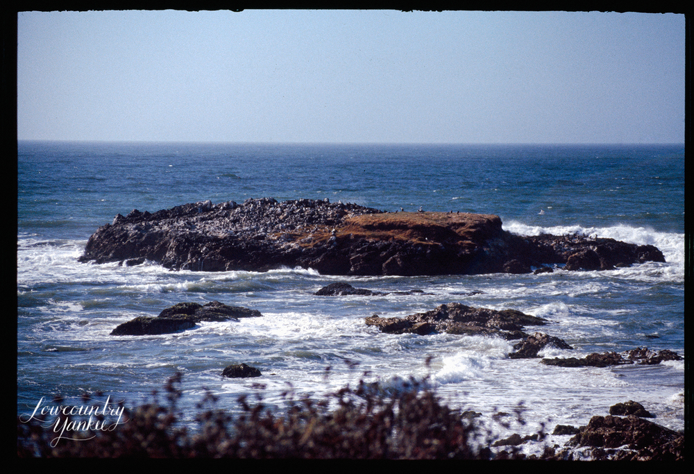 Seals and birds off the coast of California, 2005.  Slide film.