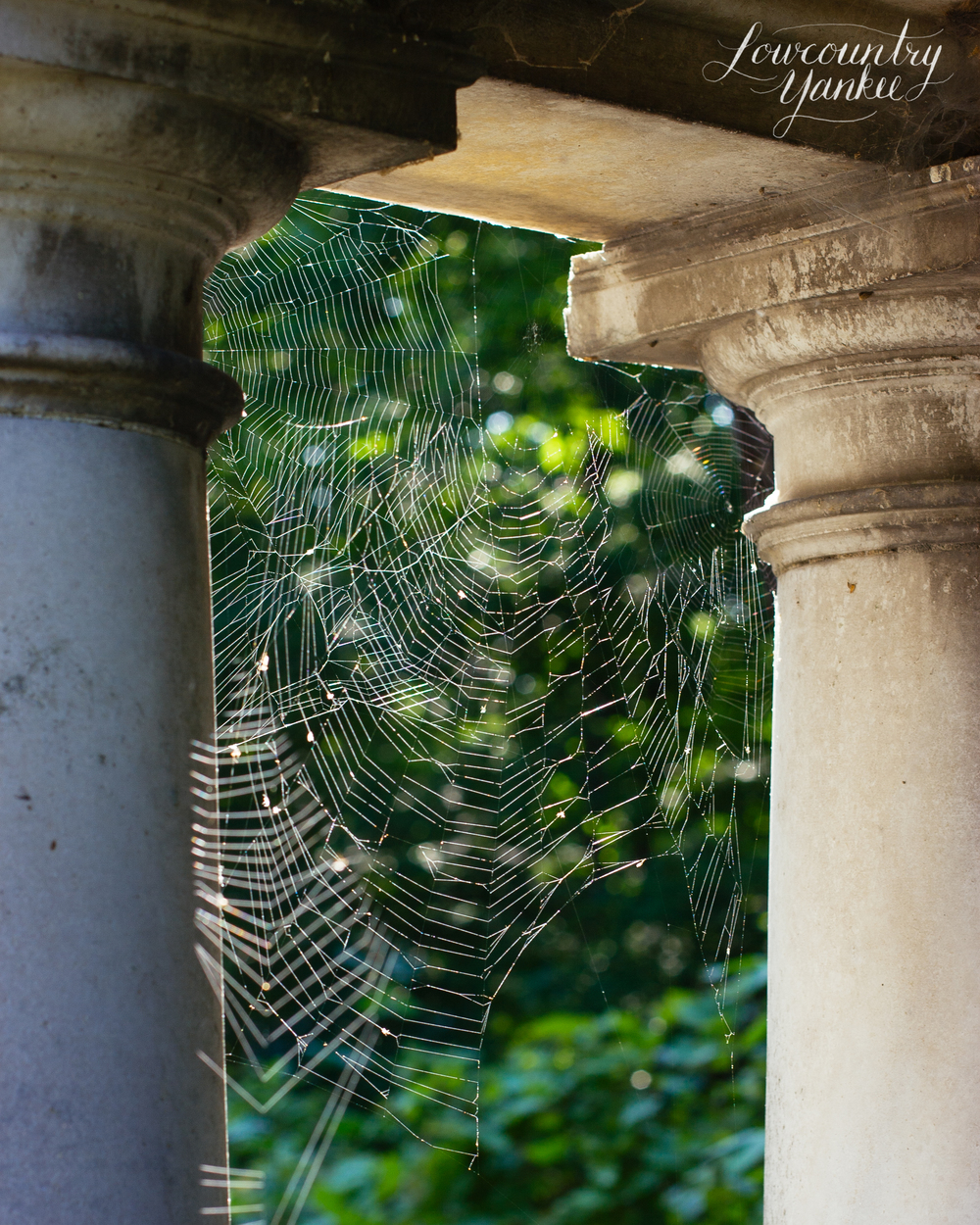 Spiderwebs, Lake Forest Cemetery, IL 2009