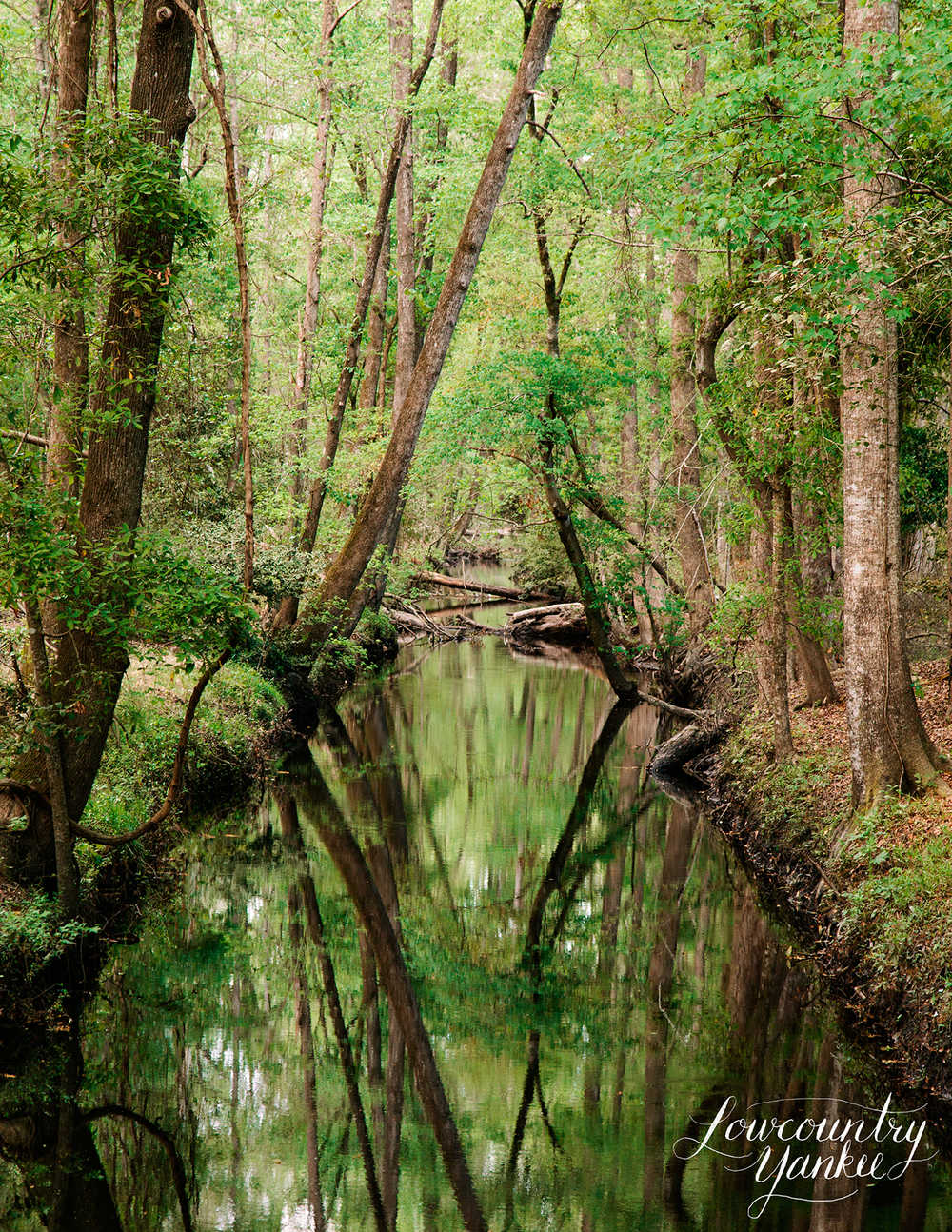 Ireland Creek, Walterboro
