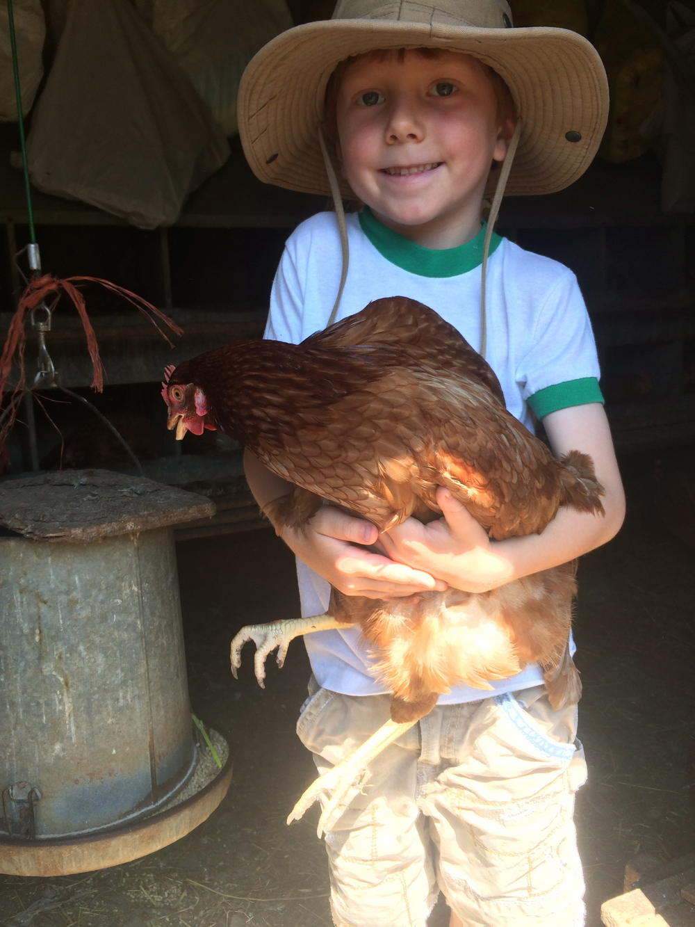 Are chickens safe for children?