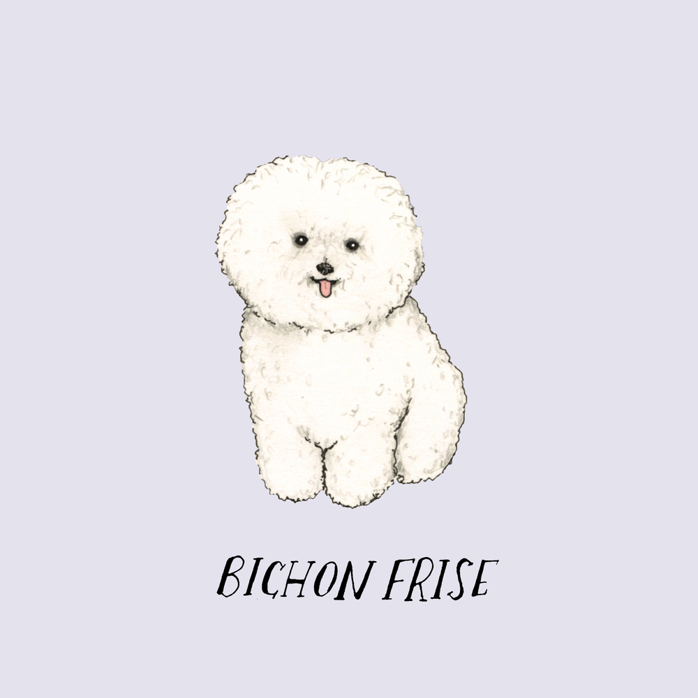 Dogadaytbishonfrise.jpg
