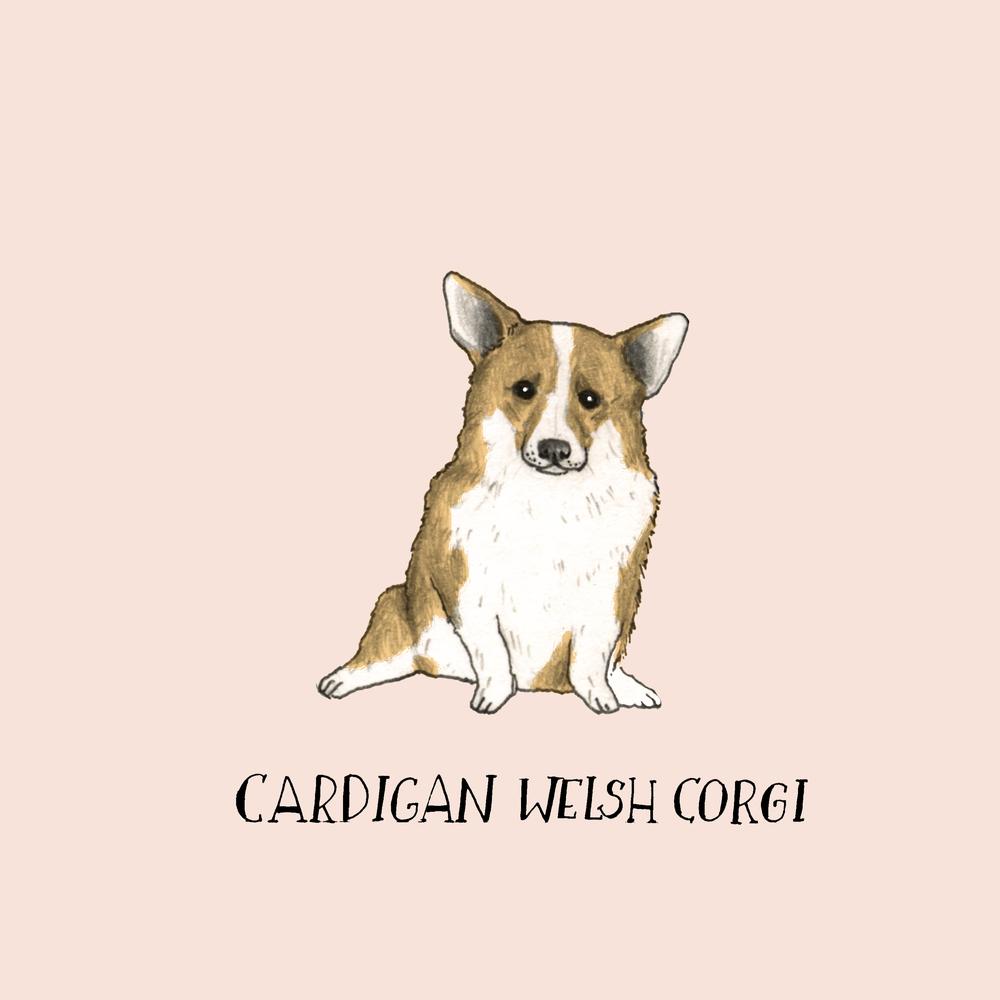 Dogadaycardiganwelschcorgi.jpg