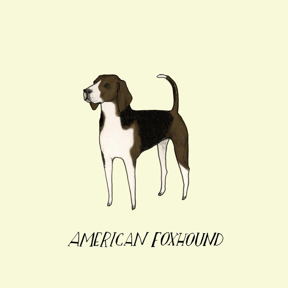 Dogadayamericanfoxhound.jpg