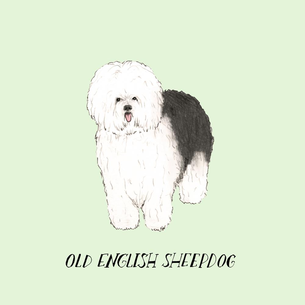 Dogadayoldenglishsheepdog.jpg