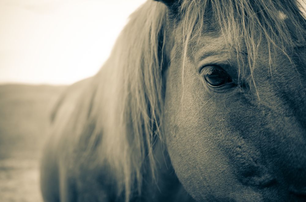 Horse_.jpg