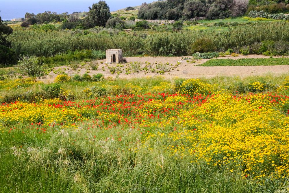 Garden in Gozo