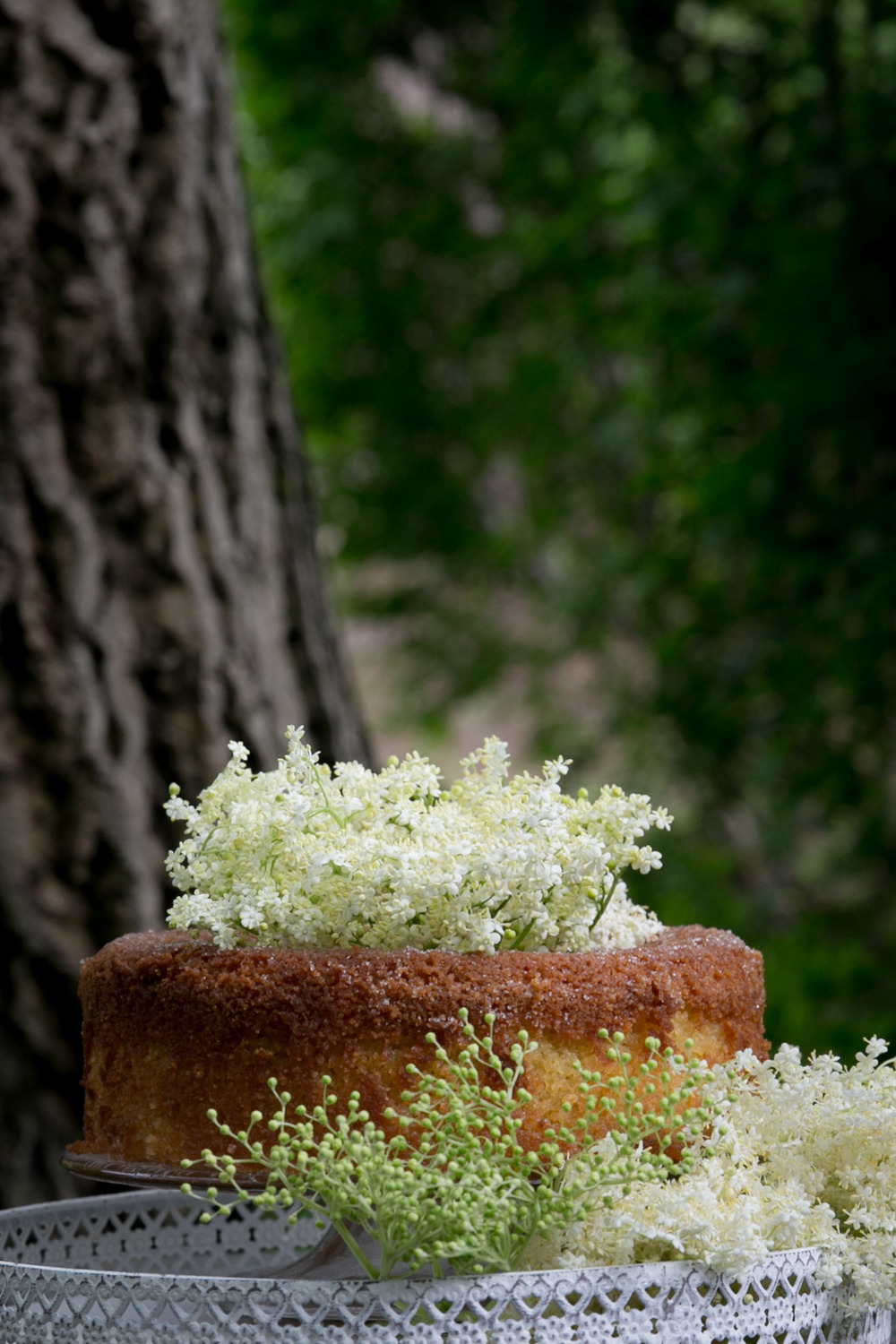 Cakes with elderflowers