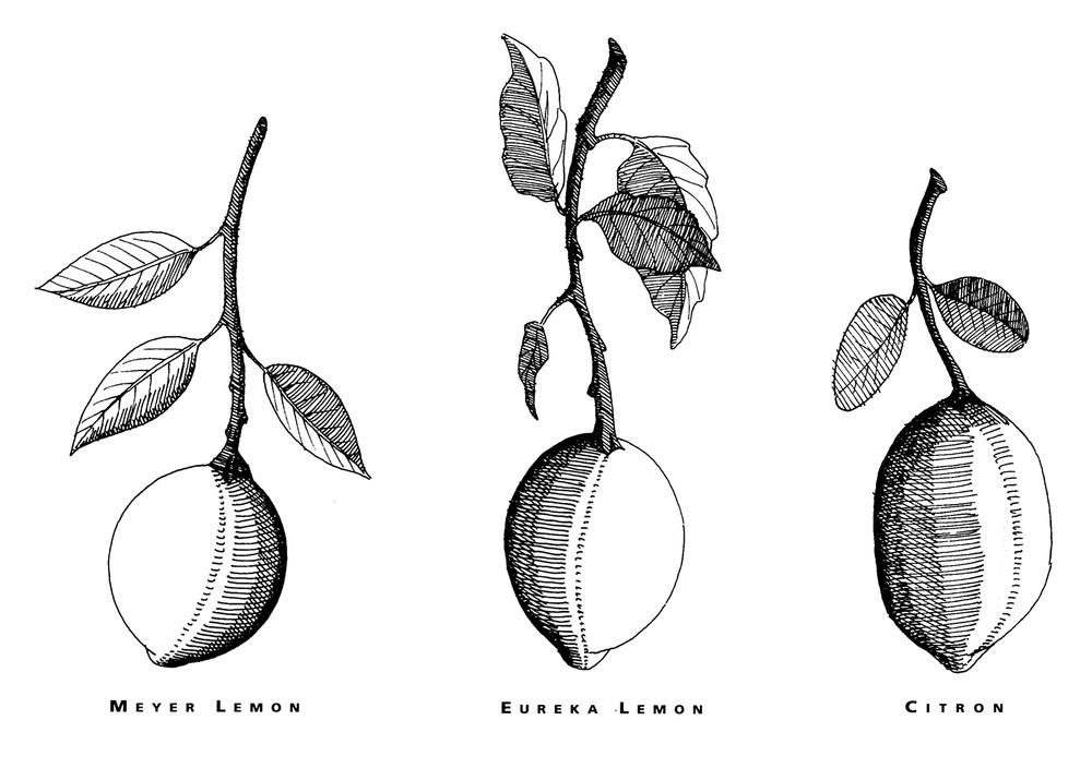 three-lemons.jpg