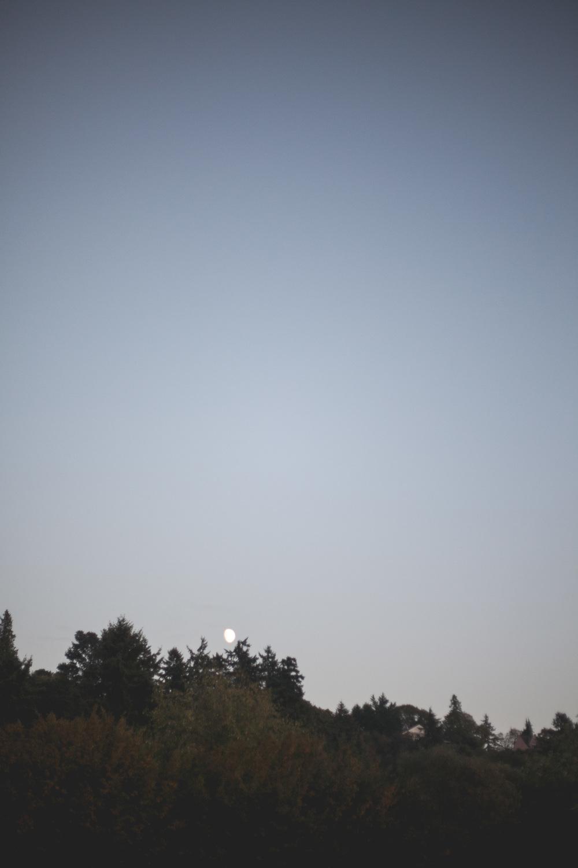moon-golden-gardens_annette-rotz.jpg
