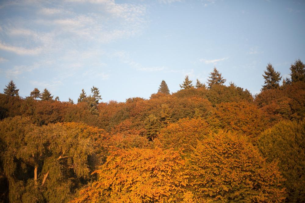 gold-trees_annette-rotz.jpg