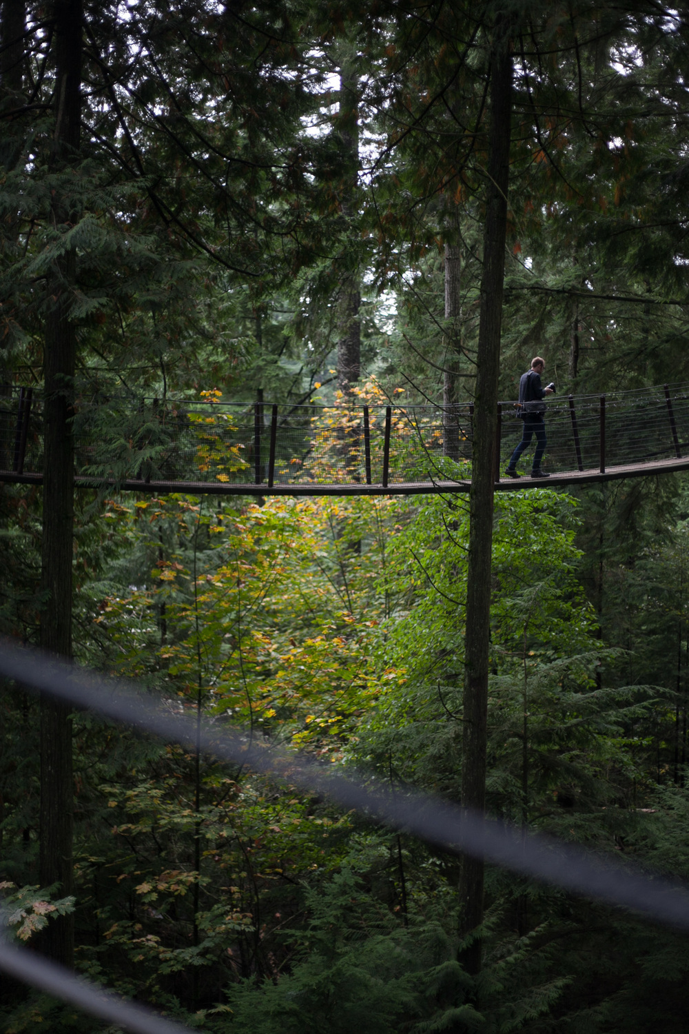 capilano-tree-adventure.jpg