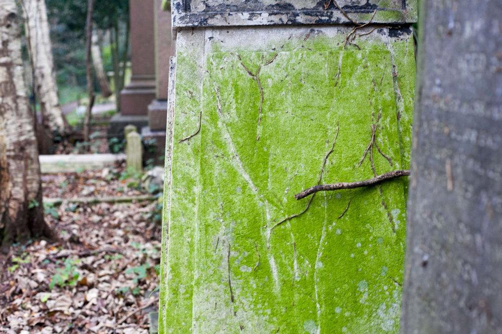 Abney Park Cemetery   November 2015