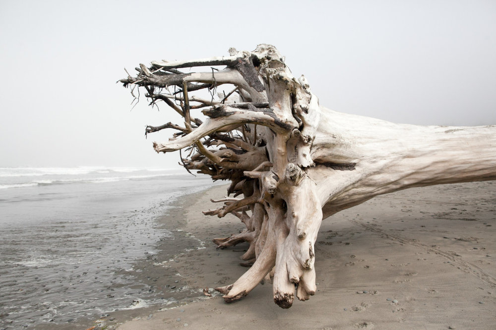 Quileute Oceanside Resort   Olympic Coast, Washington  August 2014