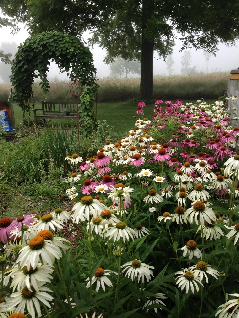 mom's_garden.jpg