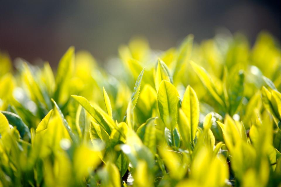 Fira in våren   2014 SHINCHA    läs mer