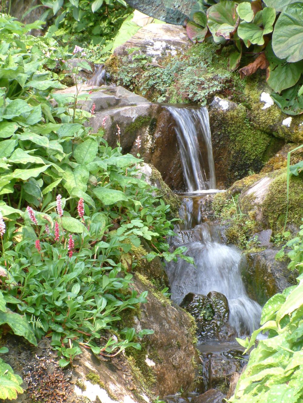 ponds (21).jpg