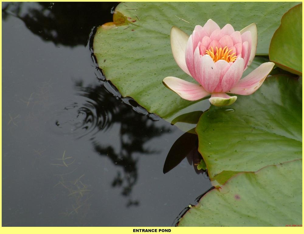 ponds (106).jpg