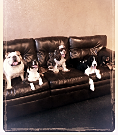 Here are some of our satisfied pups lounging in the Woof Lounge.