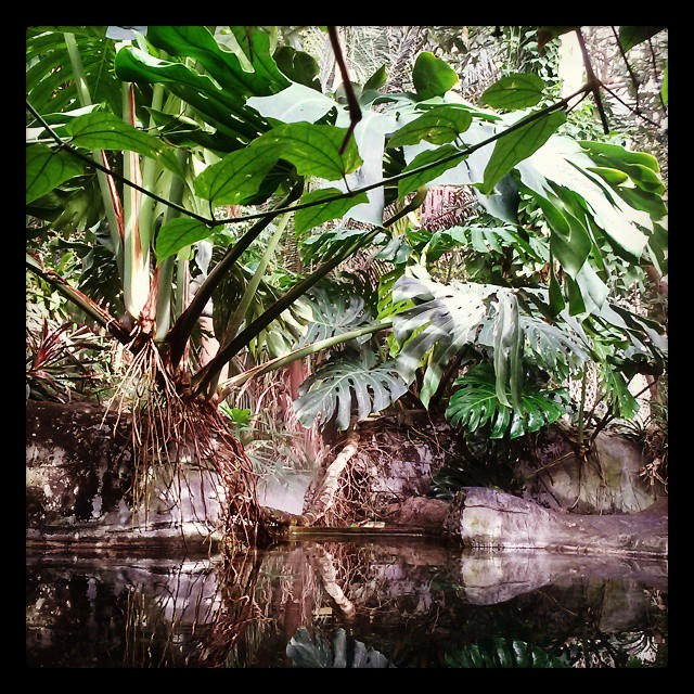Could have camped out in the tropical room at Como Conservatory all day