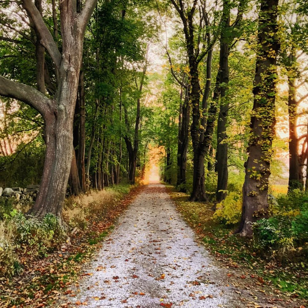 Path to Sunset.  #landscape #path #sunset #perspective #trees #sky #skyonfire #hdr #iphone7plus #bristol #rhodeisland #goldenhour #blithewold #blithewoldmansion #autumn #leaves #nature