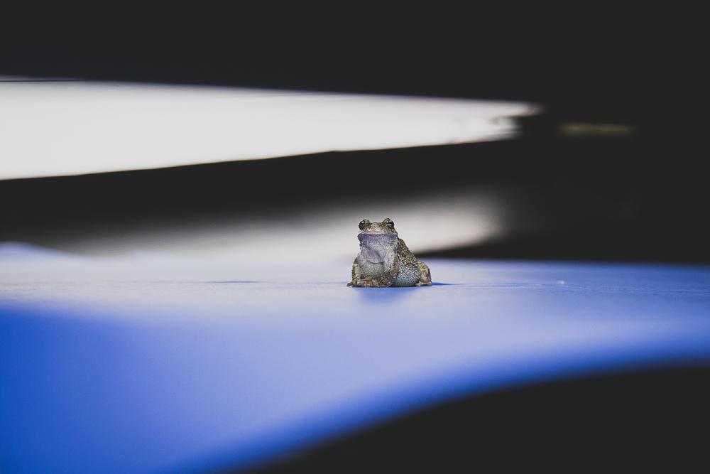 Shedd_Amphibians-1.jpg