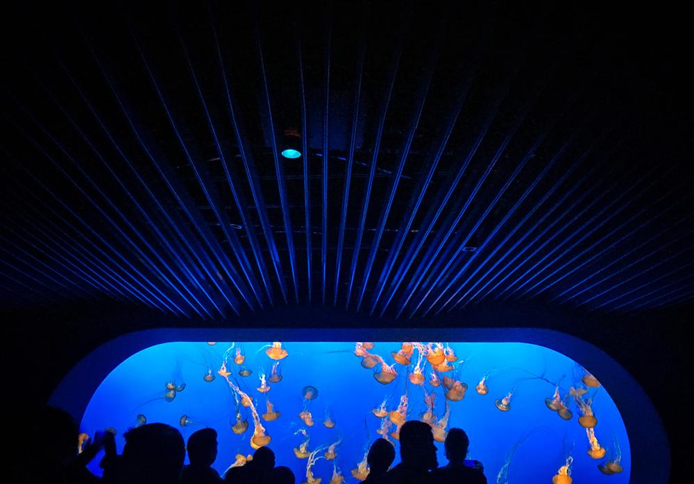 mont_aquarium.jpg