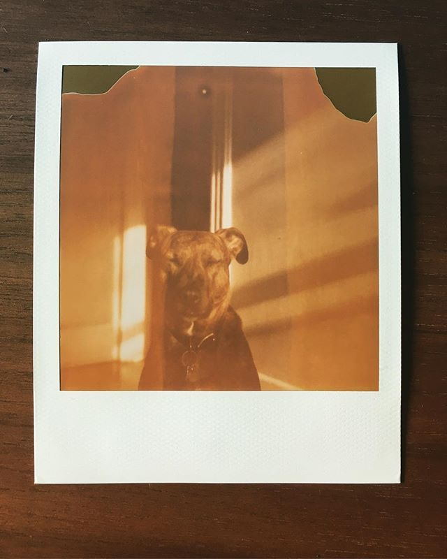 Turns out shooting 8 year expired Polaroid film through a 30 year old camera is how the founding fathers used to do a kelvin filter on their Instagrams.