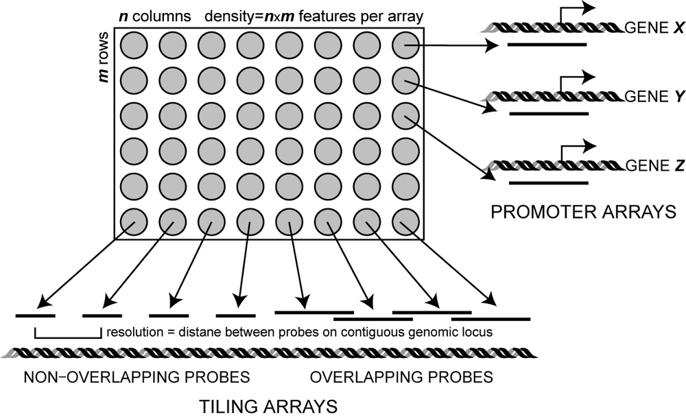 tiling and promoter array designs
