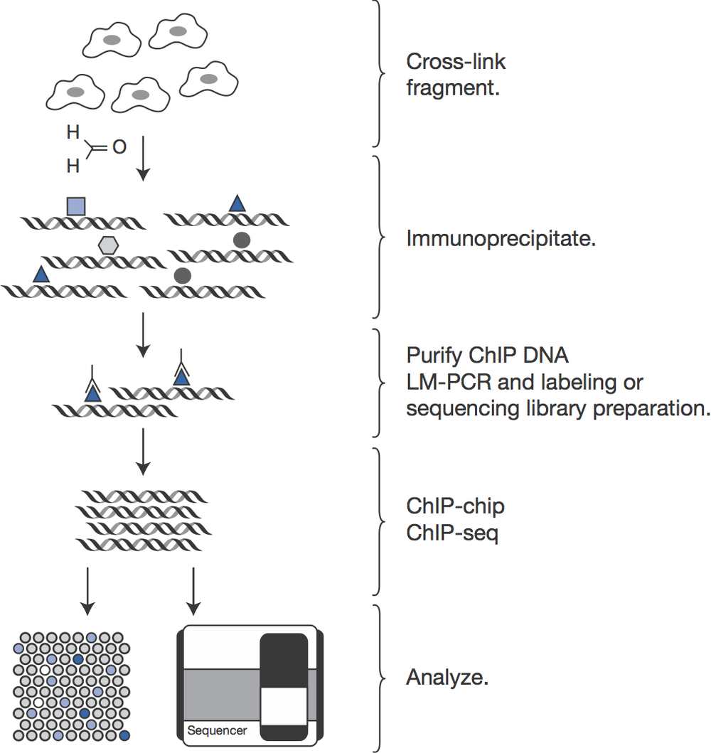 ChIP-chip and ChIP-seq