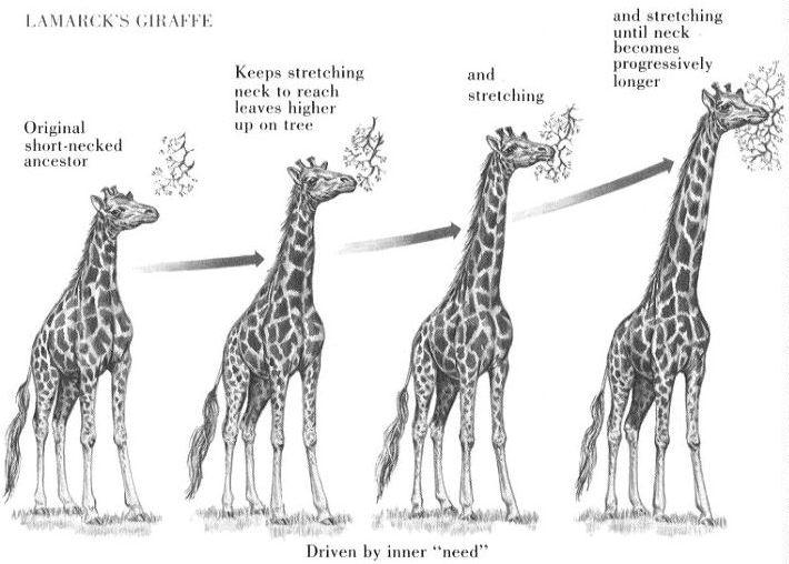 giraffe_lamark.jpg