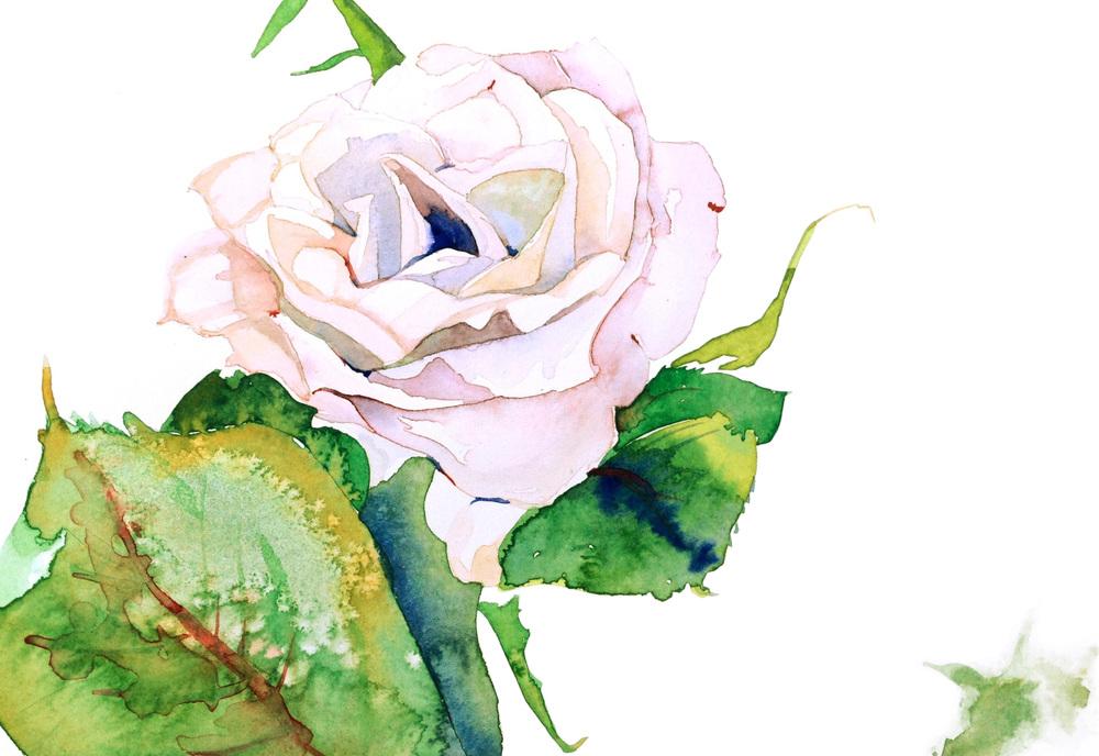 white:  rosa