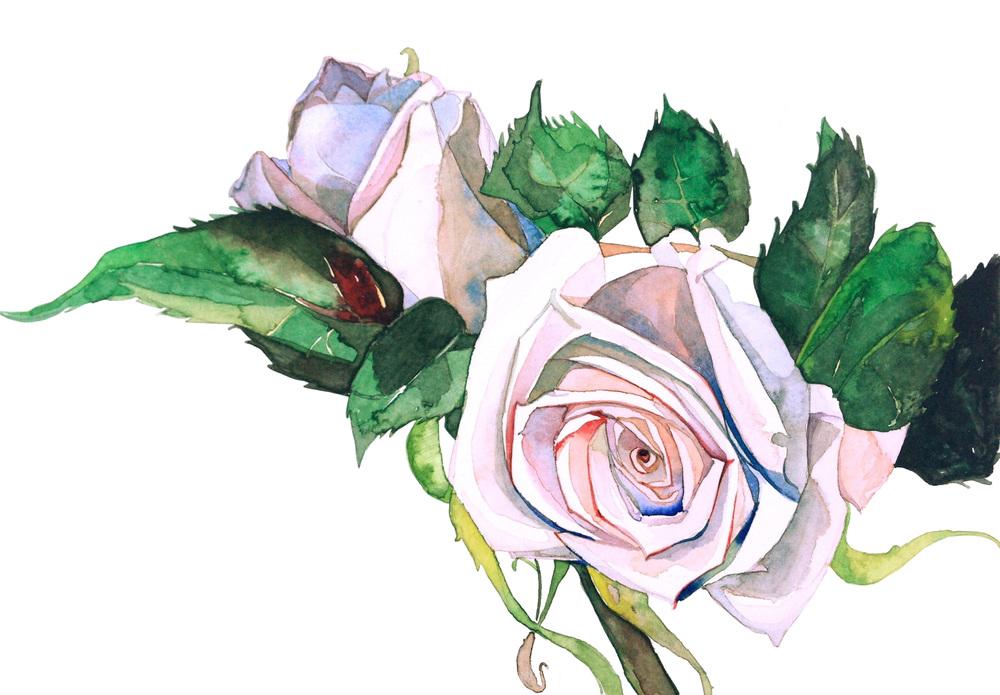 white:  rosie