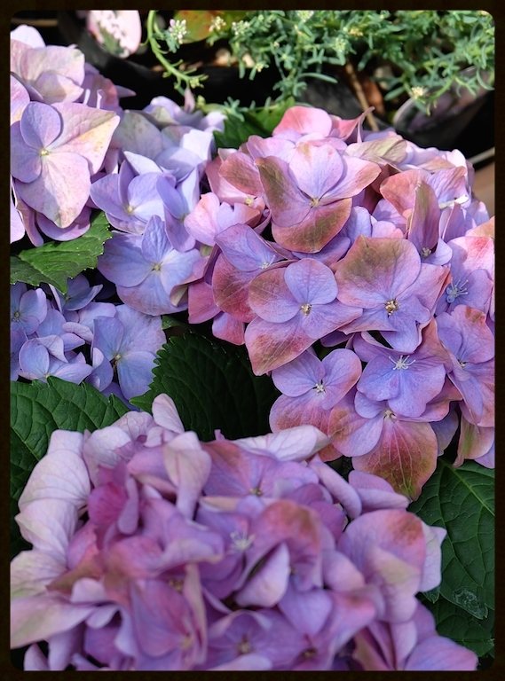 雨のしずくで、さらに綺麗なこの時期の美花♡
