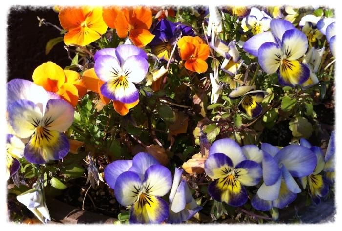 いろいろな色の花がみんなきれいに咲いて、花束みたいになるといいね〜♡
