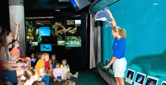 楽しい遠足、課外授業!  #fieldtrip#aquarium#parenting