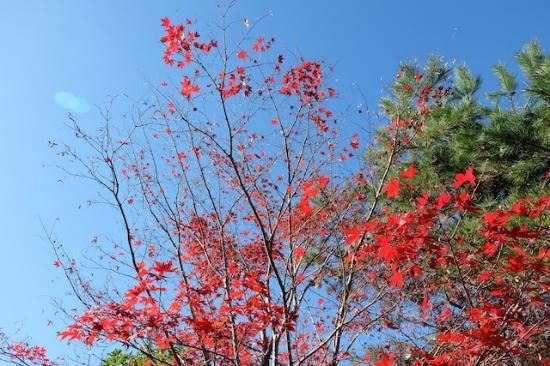 今年初めて、ゆっくり楽しんだ紅葉。 日本の四季は宝物、だと思う。 #okutama#autumn#leaves