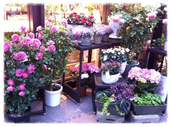 きっと、お花なんか部屋に飾ってみたくなる♡                             #flowershop#marunouchi#lifeorganize#room#interior