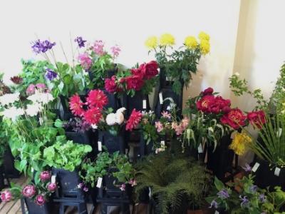 器を選んで、次に草花を選ぶ💐