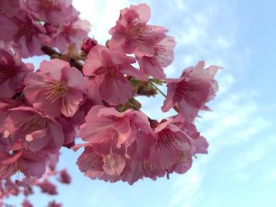 春うらら***
