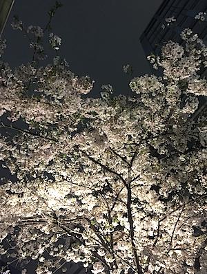 夜桜・・・幻想的できれい。