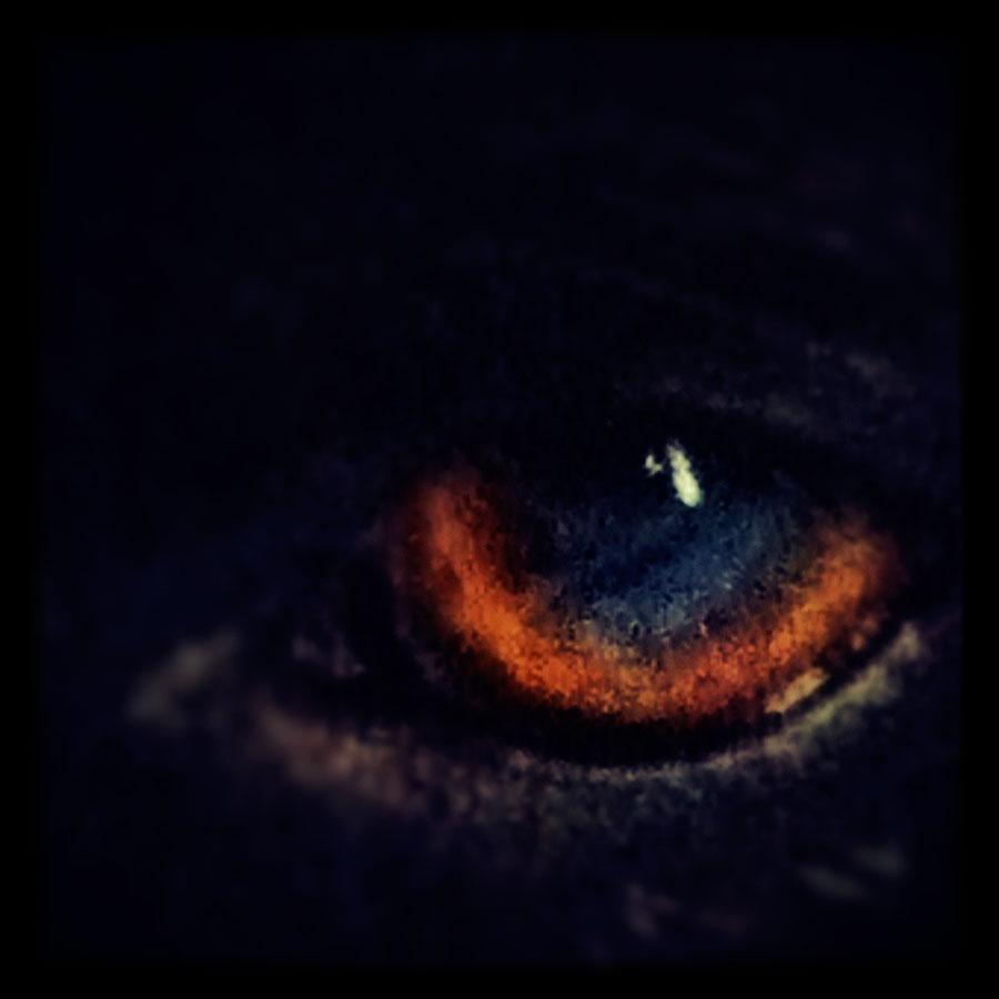 Stella's Eye
