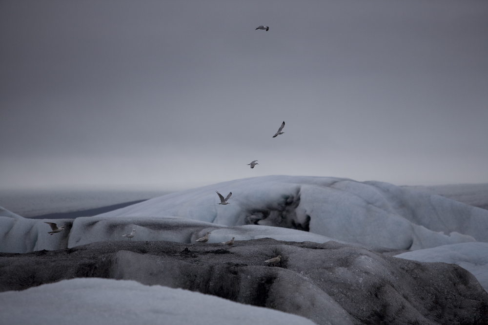 glaciers-10.jpg