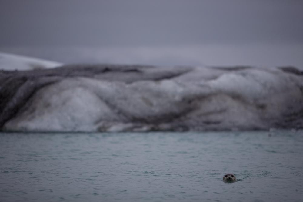 glaciers-21.jpg
