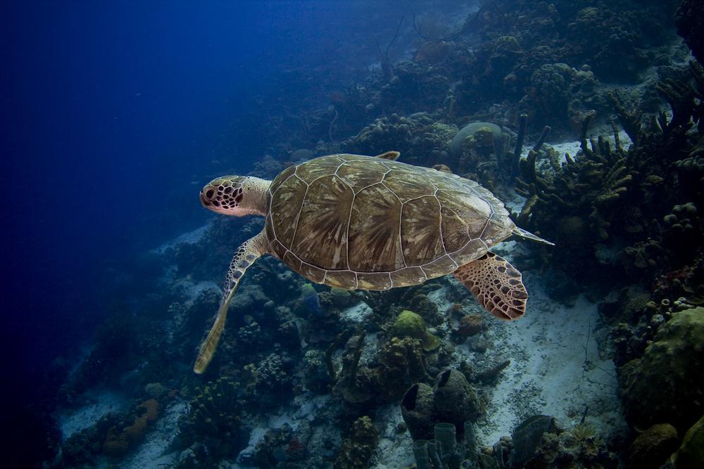 underwater-29.jpg
