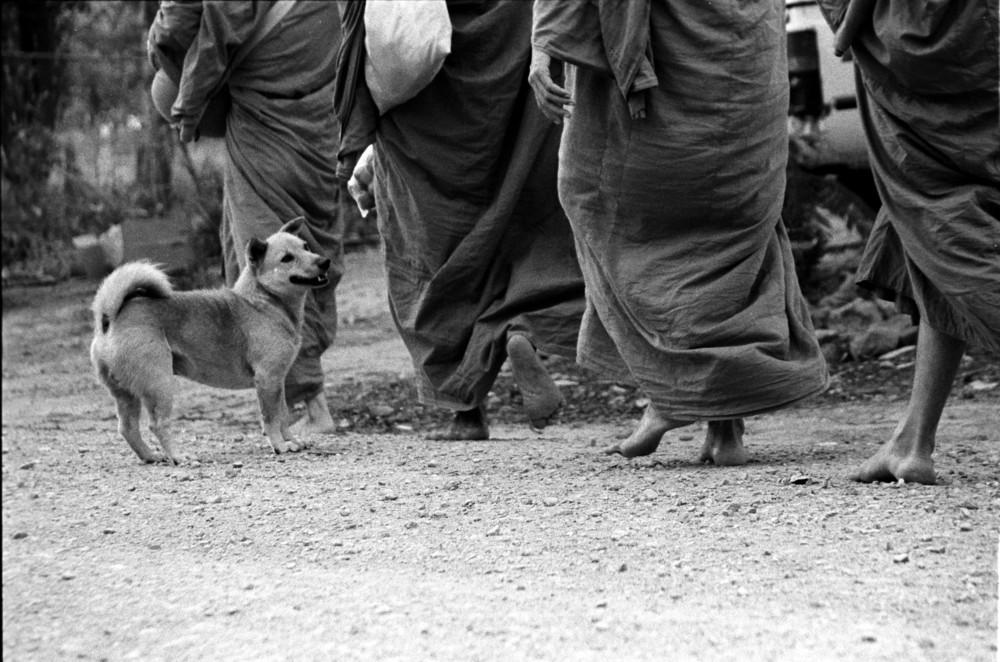 monkdog.jpg