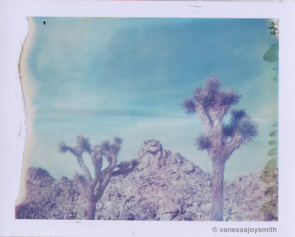 2Joshuatrees.jpg