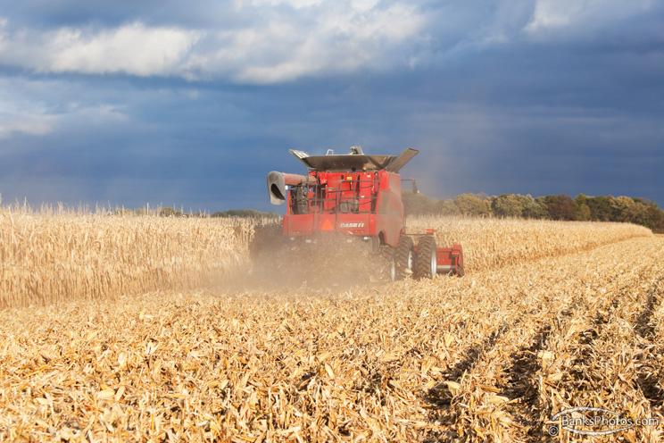 IMG_8737-SS_Case_Combine_Harvesting_Corn.jpg