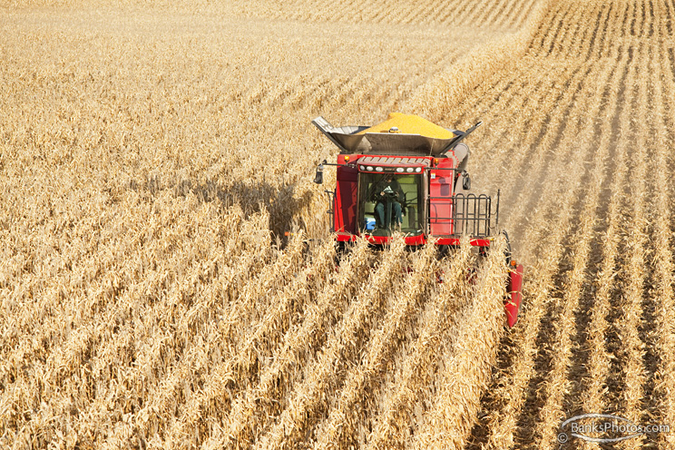 IMG_8747_SS-Case-Combine_Harvesting-Corn.jpg