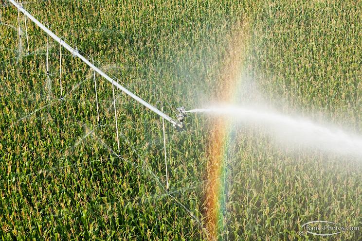 IMG_0133_SS-Agriculture-Pivot-Sprinkler-Corn.jpg