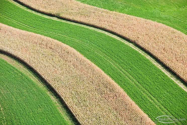 IMG_4662_SS-Corn-Hay-Strip-Crop-Aerial.jpg